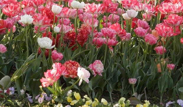 праздник цветов в детском саду