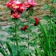 цветник в детском саду