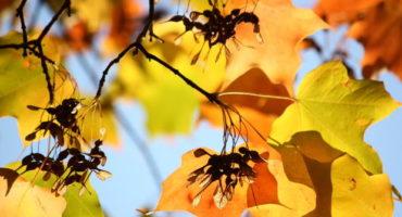 """Сценарий праздника осени """"Разноцветная Осень"""""""