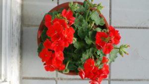 Растения в группе детского сада