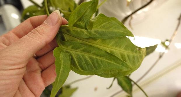 ядовитые растения в детском саду