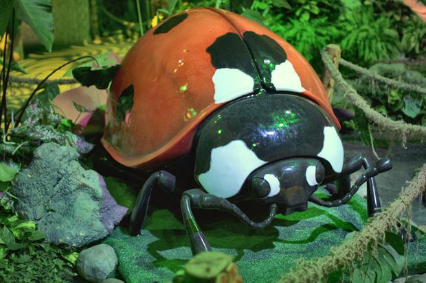 ladybug - копия