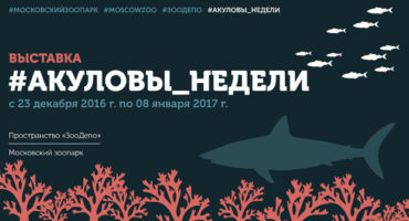 выставка акул