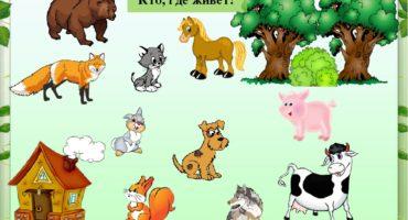 Тема «Кто где живёт?» занятия в детском саду